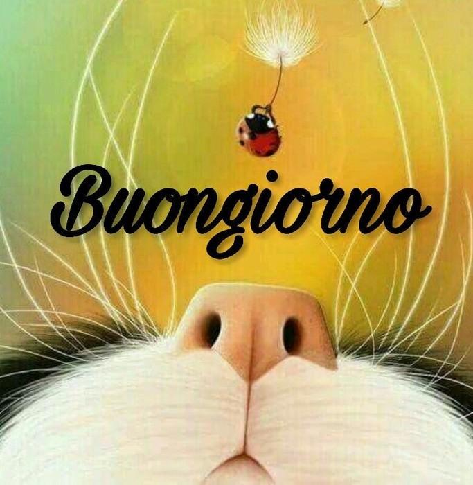 Whatsappare imagini buongiorno Whatsapp 321265962