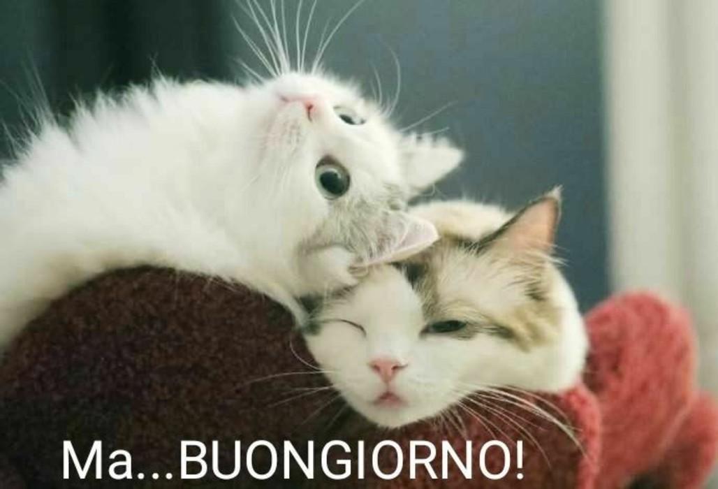 Whatsappare imagini buongiorno Whatsapp 344167087