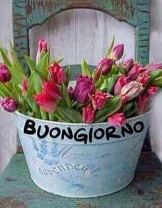 Whatsappare imagini buongiorno Whatsapp 40662348