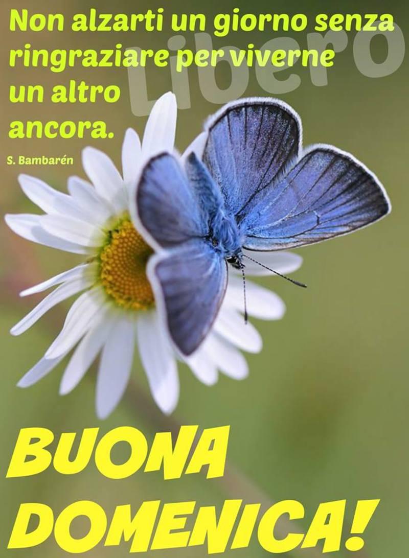 foto belle frasi facebook whatsapp buona domenica scarica gratis carine 30