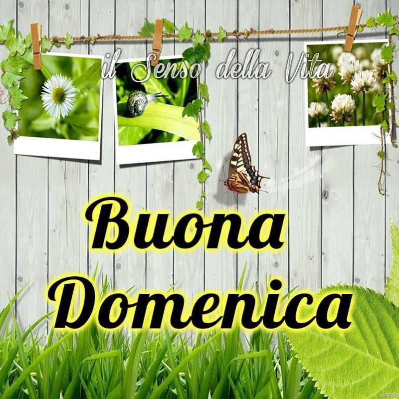 foto belle frasi facebook whatsapp buona domenica scarica gratis carine 46